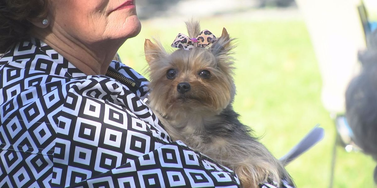 Owners and pets gather for annual Albany church service