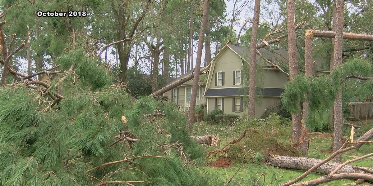 Tree service experts stress prevention ahead of severe weather
