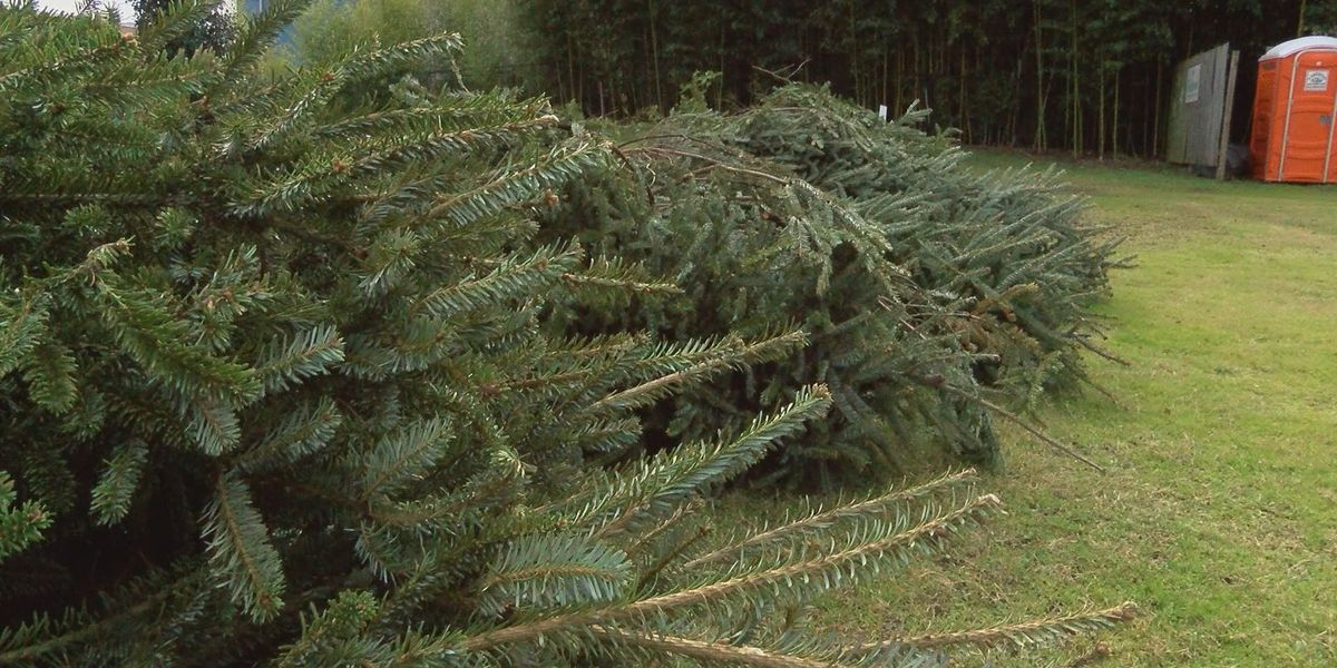 Americus city leaders assist in disposal of Christmas trees