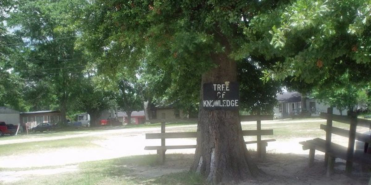 Culprits in 'Tree of Knowledge' shooting at large