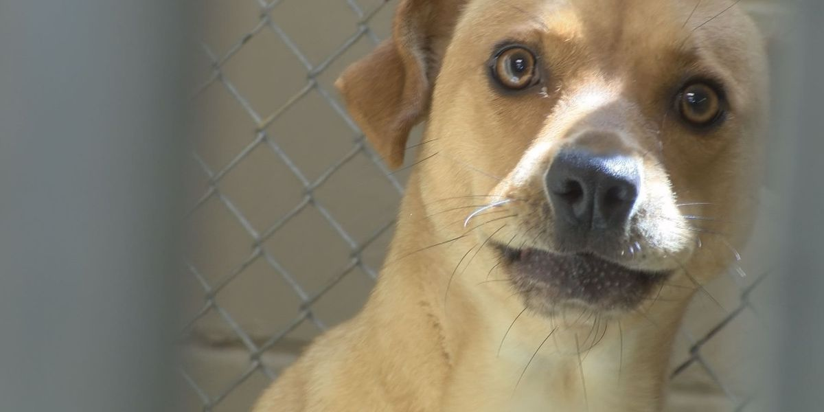 Albany Humane Society pushes for microchipping during Pet ID Week