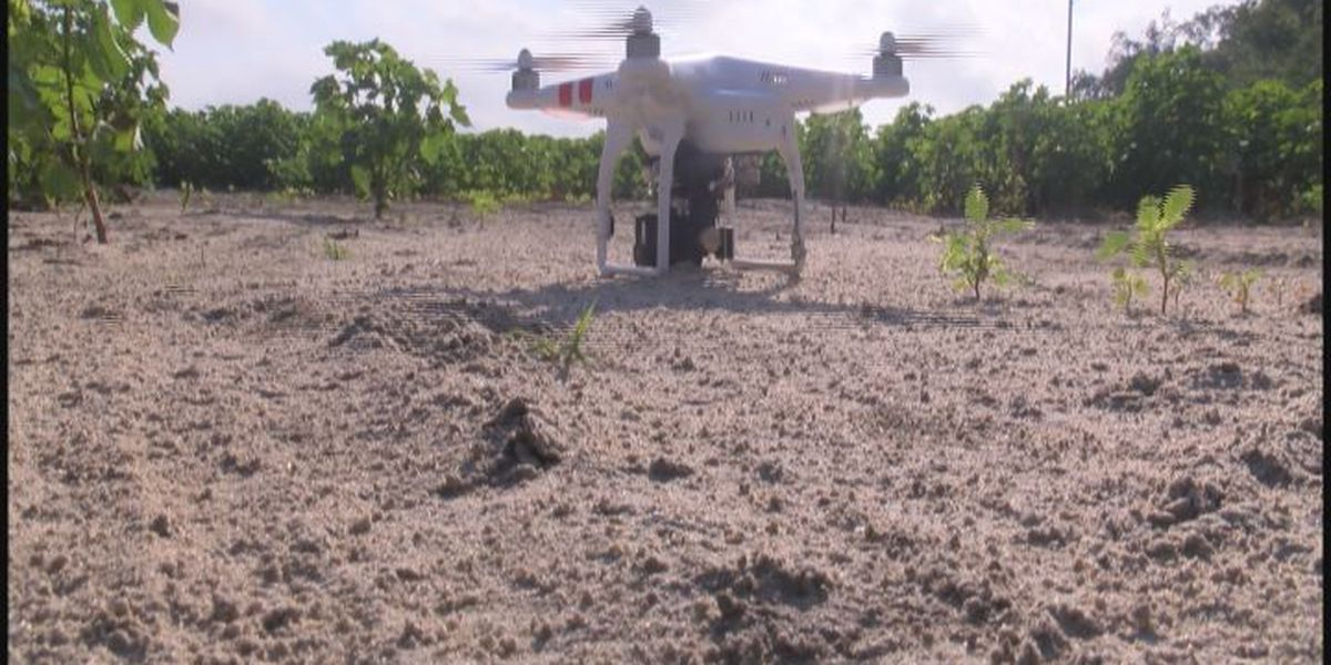 Drones could become a farmer's best friend