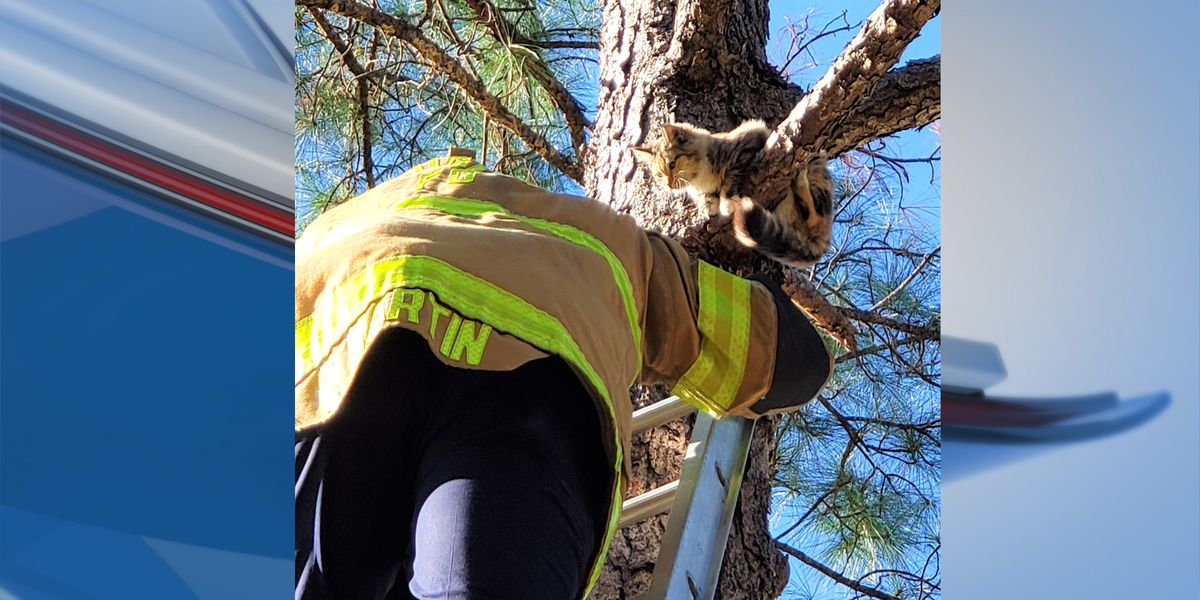 A 'purr-fect' ending: Douglas firefighter saves cat from tree
