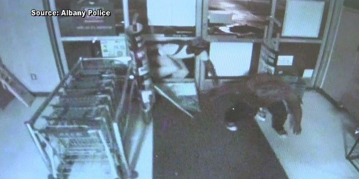 Surveillance footage from an Albany smash and grab