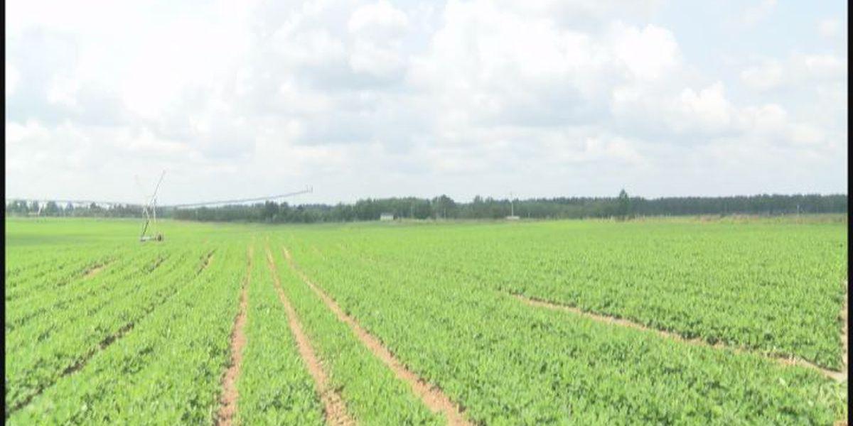 Worth County Farmer hopes for more rain