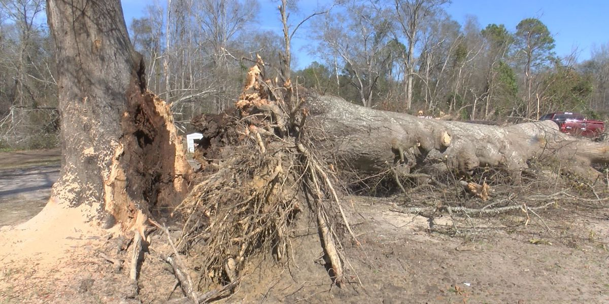 Worth storm damage project may take weeks