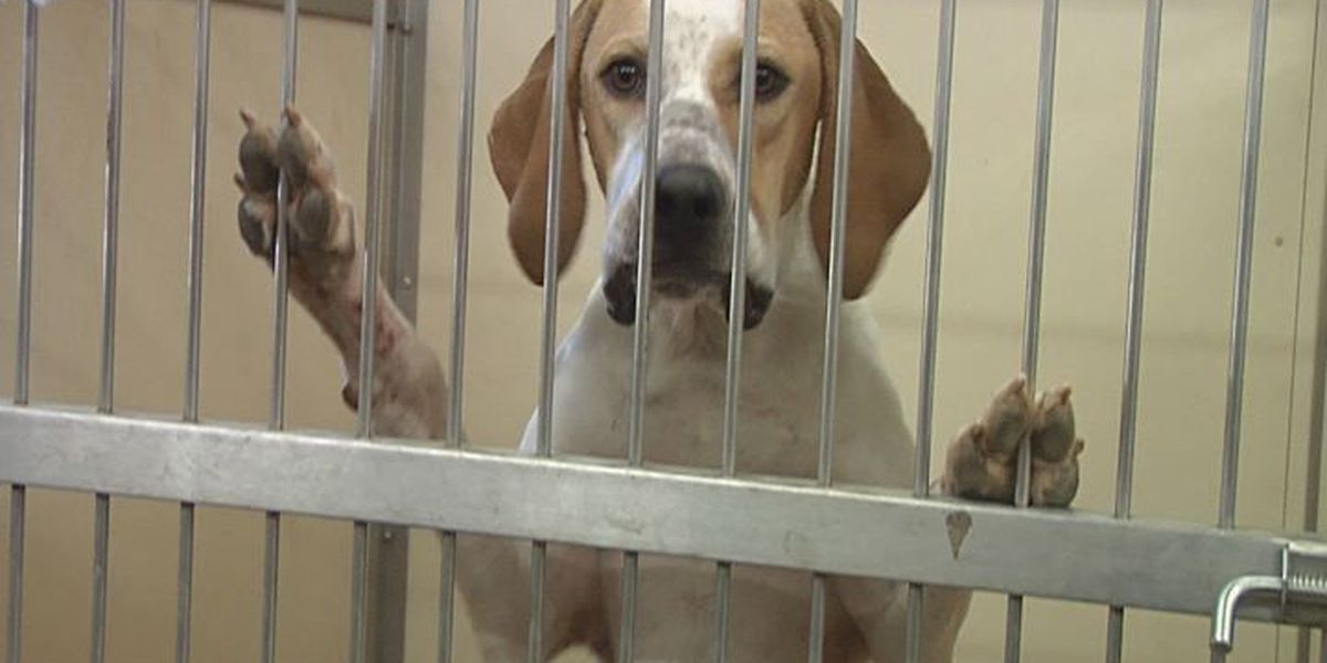 Contagious virus threatens boarded dogs