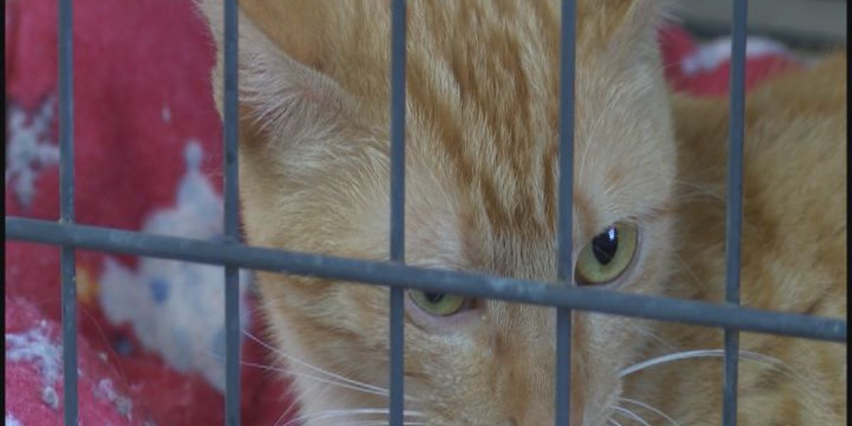 Support needed to control feral cat population
