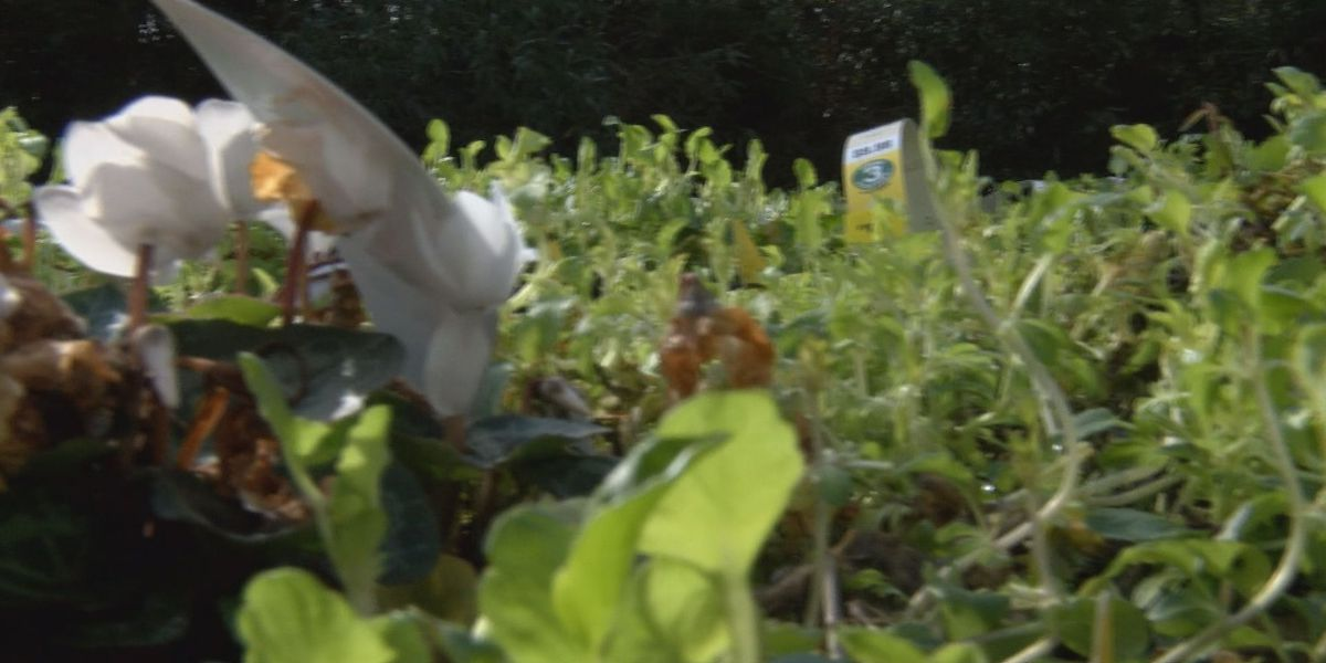 Albany woman plants seed of hope in community garden