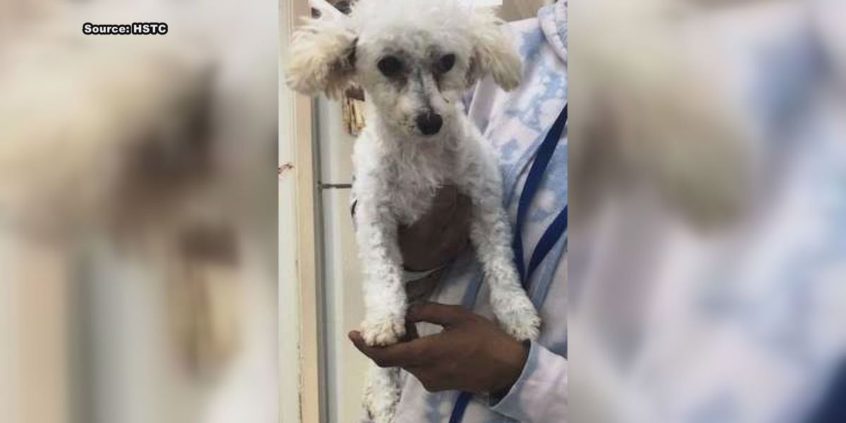 Only 1 more dog from Webster Co. puppy mill still looking for furever home