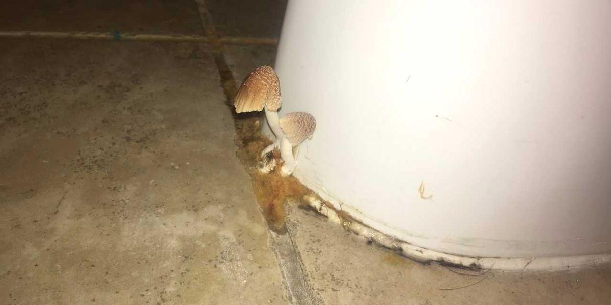 Asu Seniors Say Mushrooms Mold Grow In Their Dorm