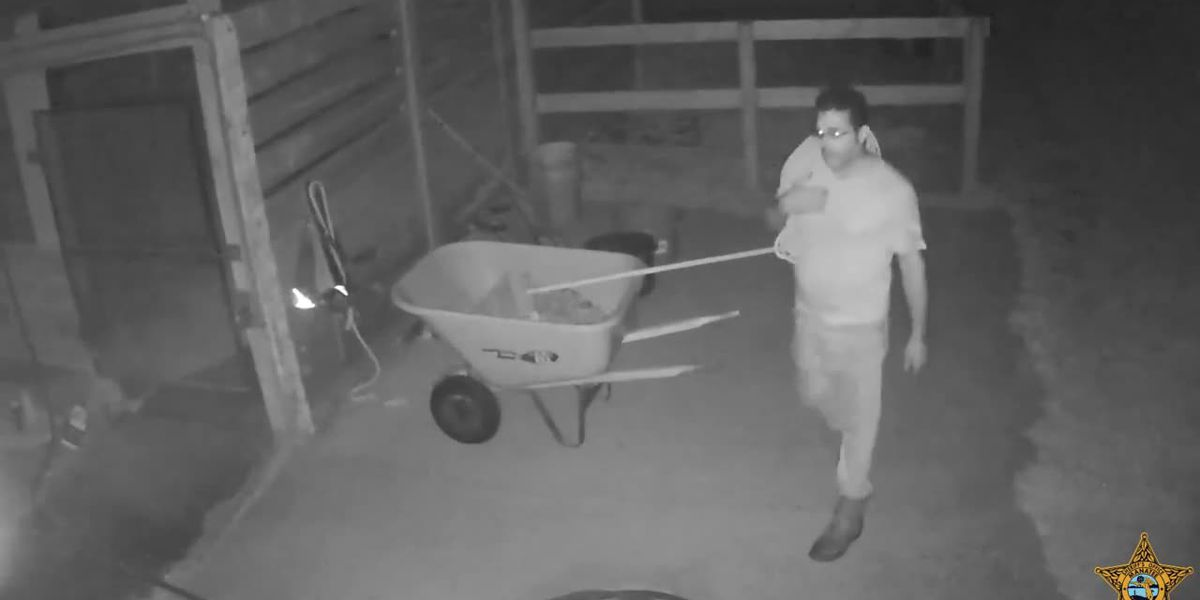 Deputies search for suspects who stole, slaughtered show horse in Manatee County