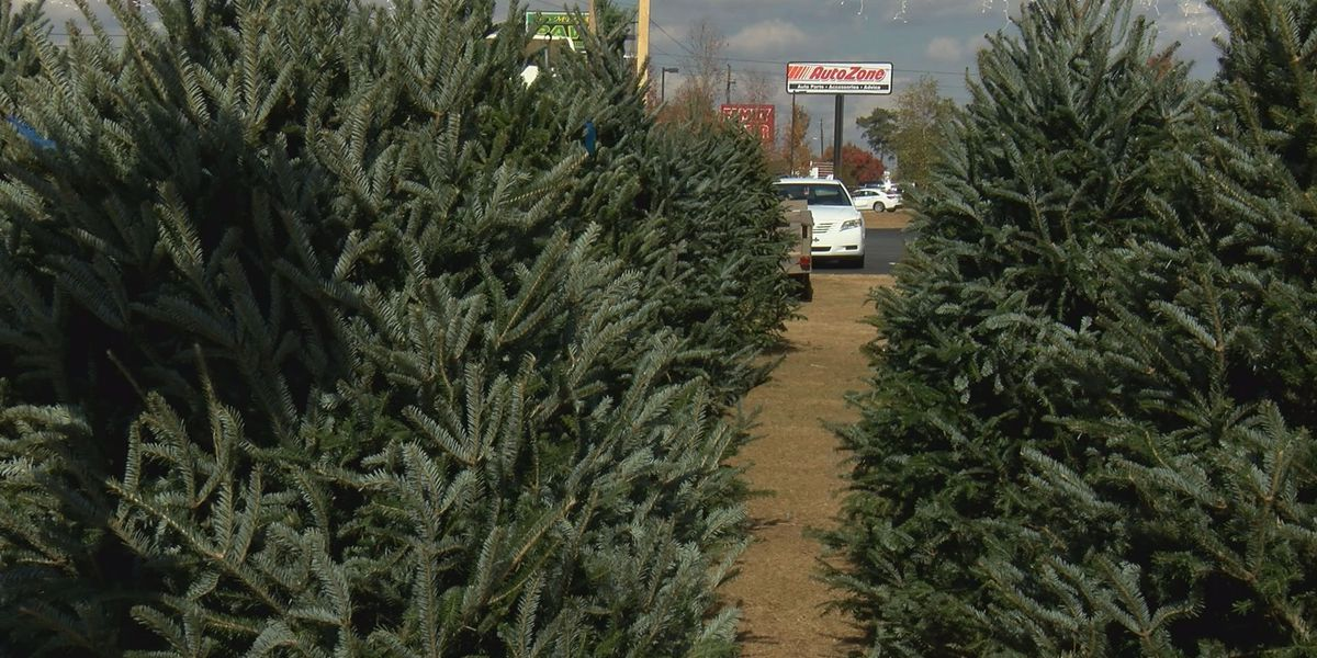 Trojan Tree Lot set to sell healthy Christmas trees