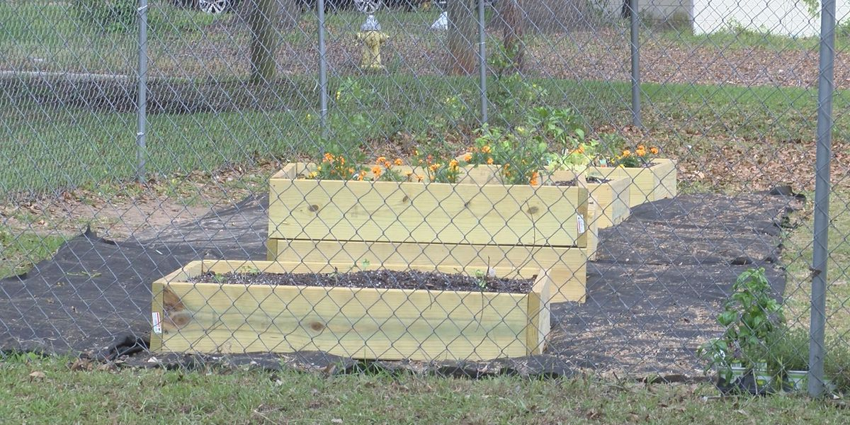 Strides made for new 'Hope Garden' to combat crime, hunger in Albany