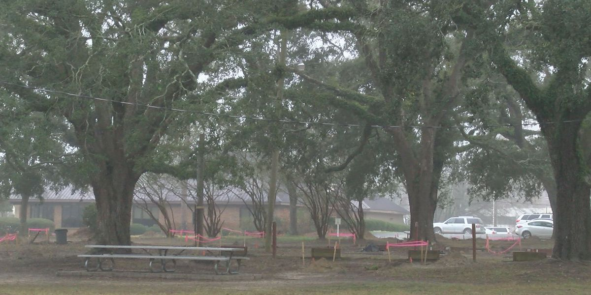 Volunteers to plant 1,000 trees at Tift Park