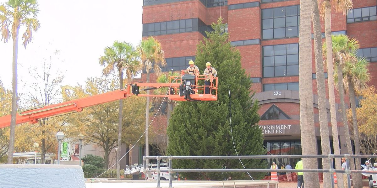 Albany Christmas tree erected downtown