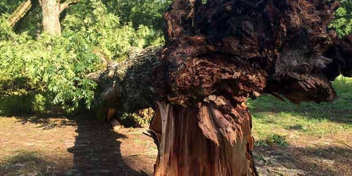 Storms cause damage across South Georgia