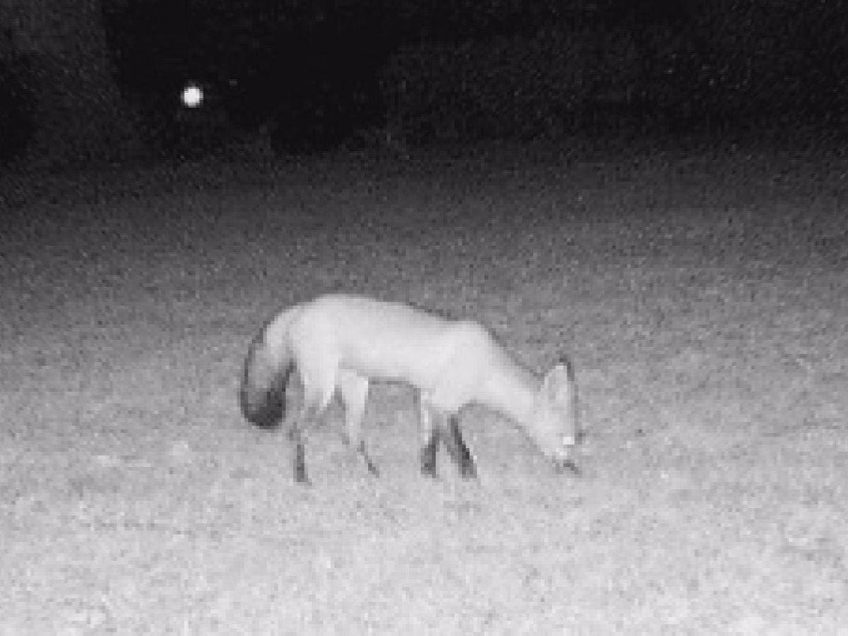 Albany residents want to know what's terrorizing neighborhood animals