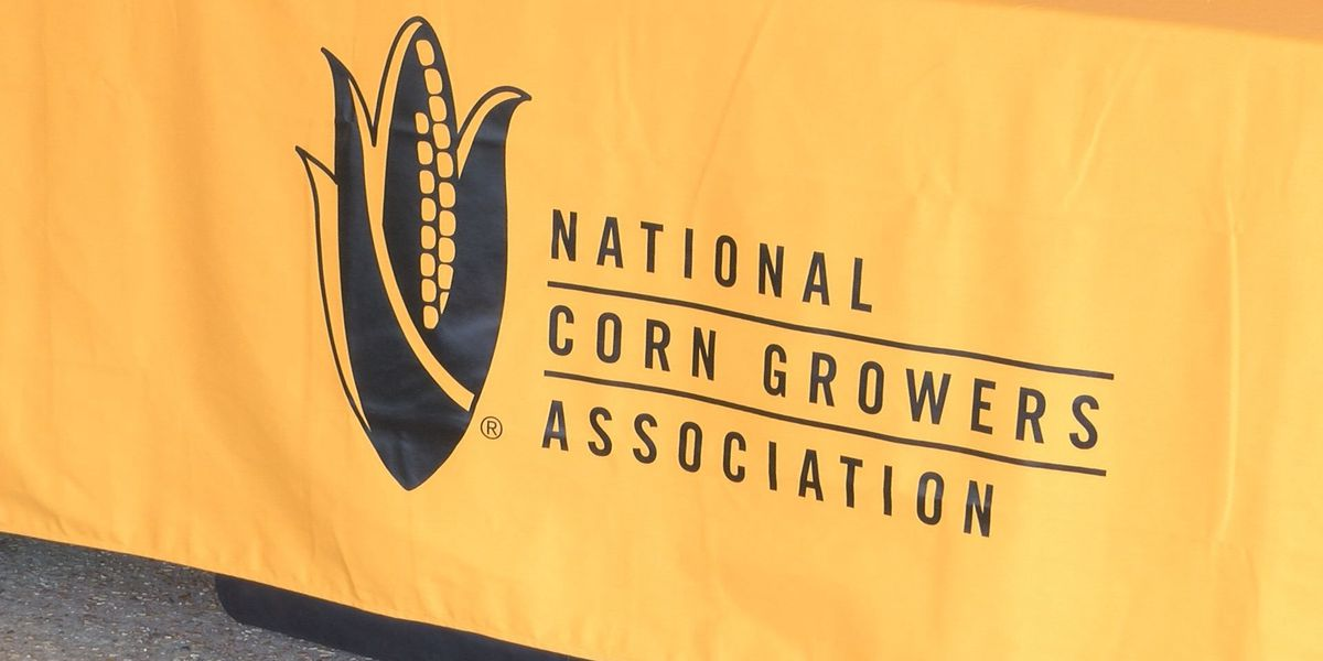 Corn growers learn new ways to increase demand for crop