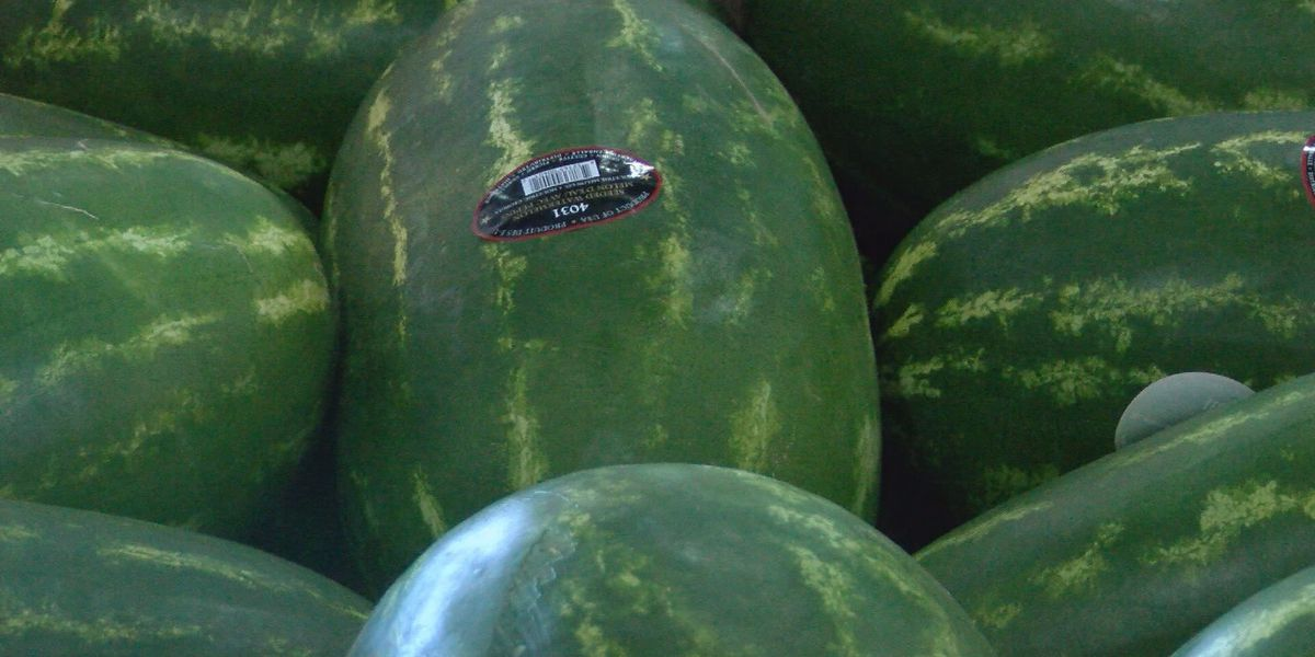 Watermelon growth average this year