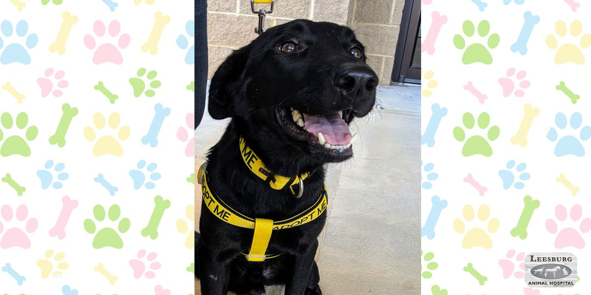 Pet of the Week Sept. 9-13