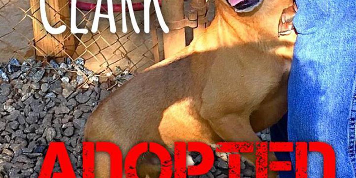 Dog abandoned in dumpster finds forever home