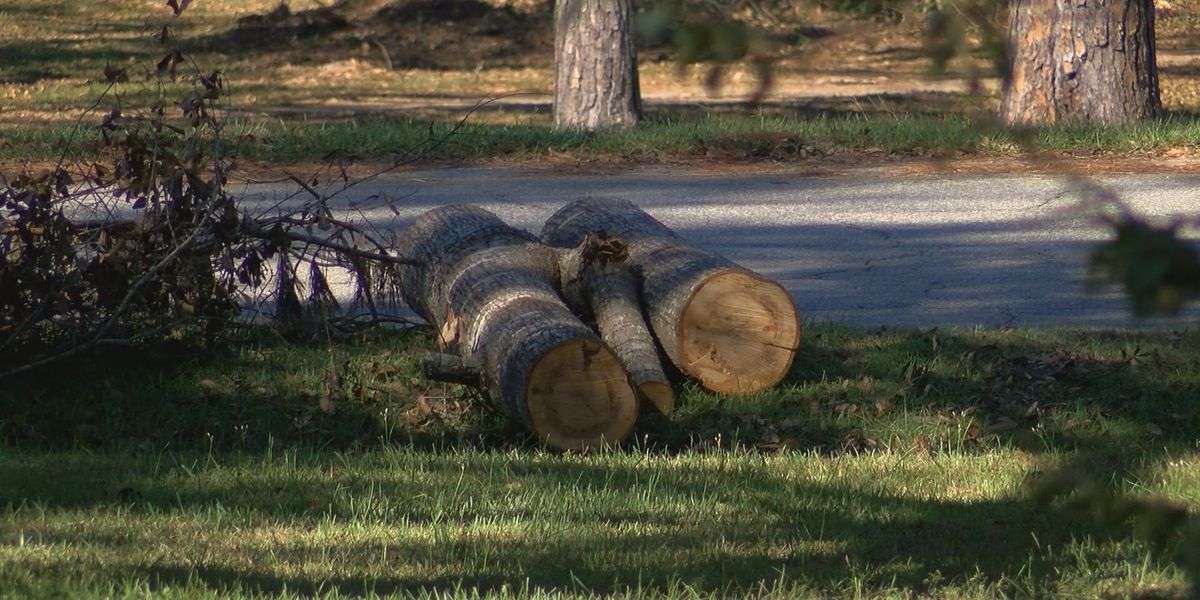 Dougherty Co. commissioner urges residents to be patient during storm clean up