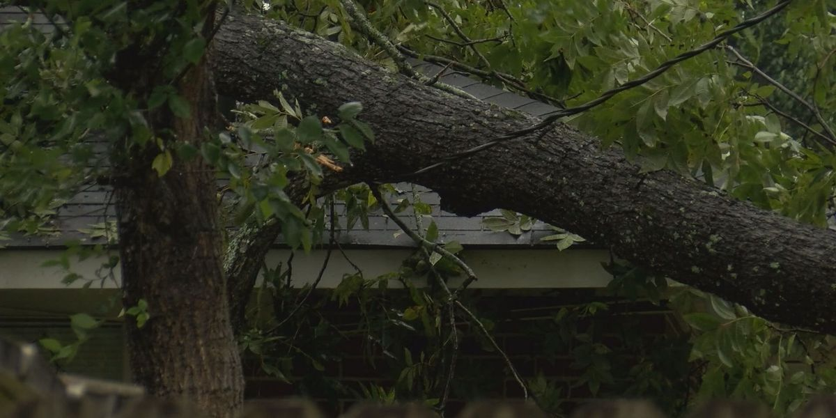 What to do with Irma debris in Dougherty County