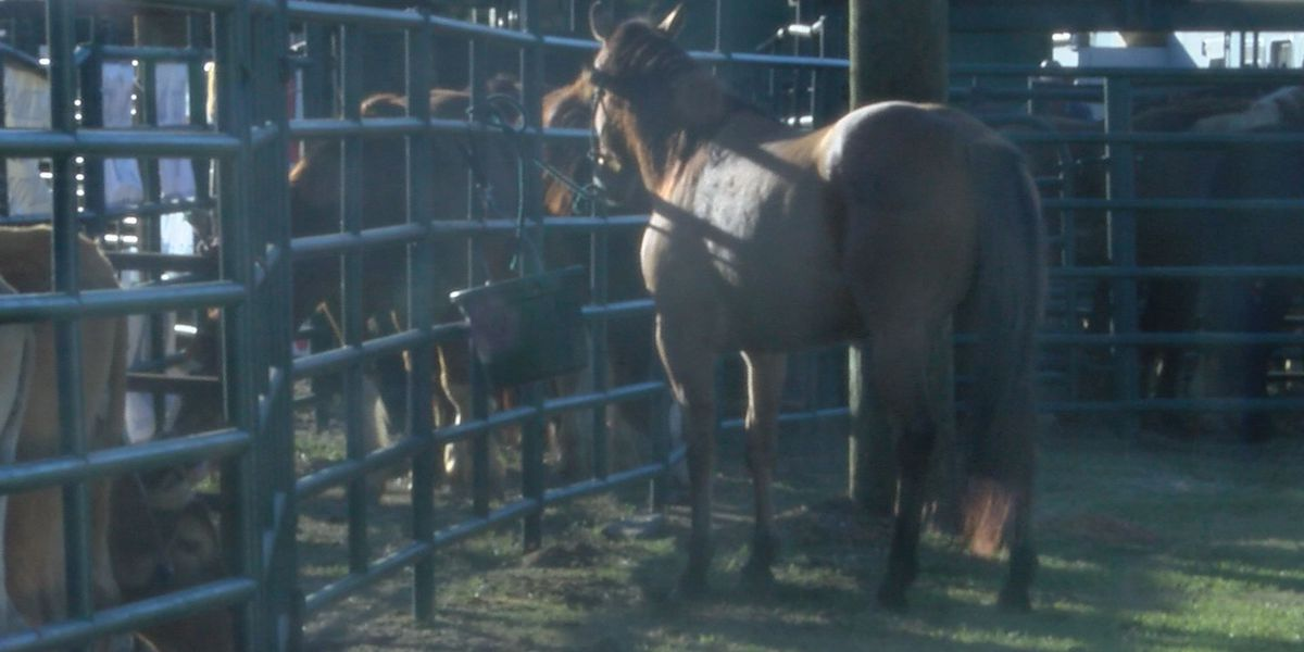 ABAC hosts homecoming weekend rodeo
