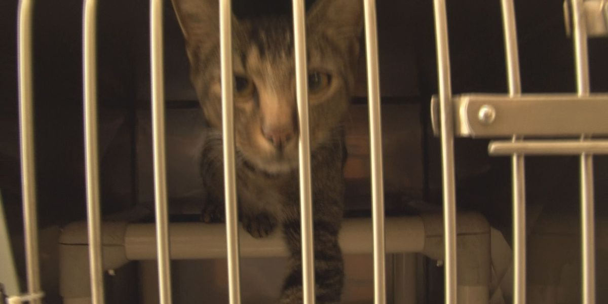 Nearly 300 animals adopted for Clear the Shelters 2017
