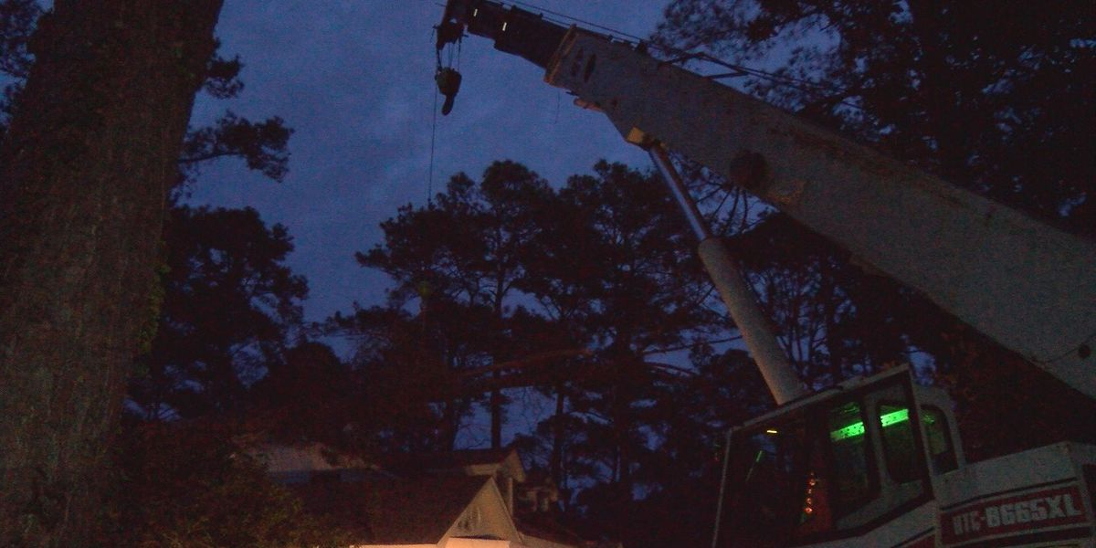 Albany tree service help customers remove trees off homes