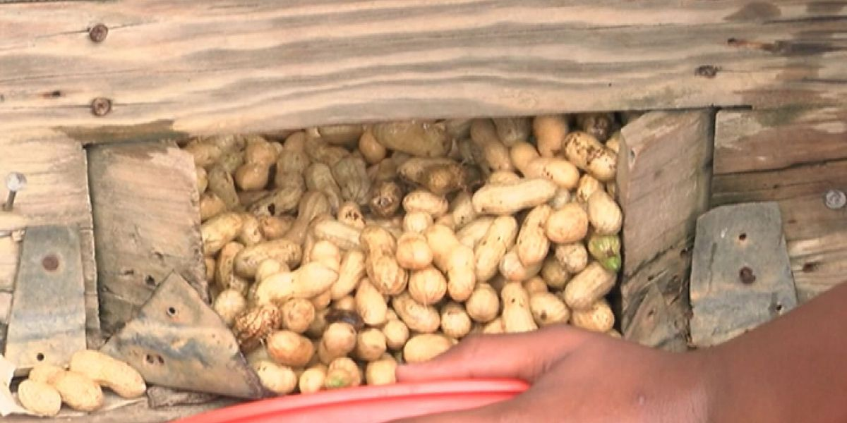 Mixed bag of nuts: good and bad news on peanut exports