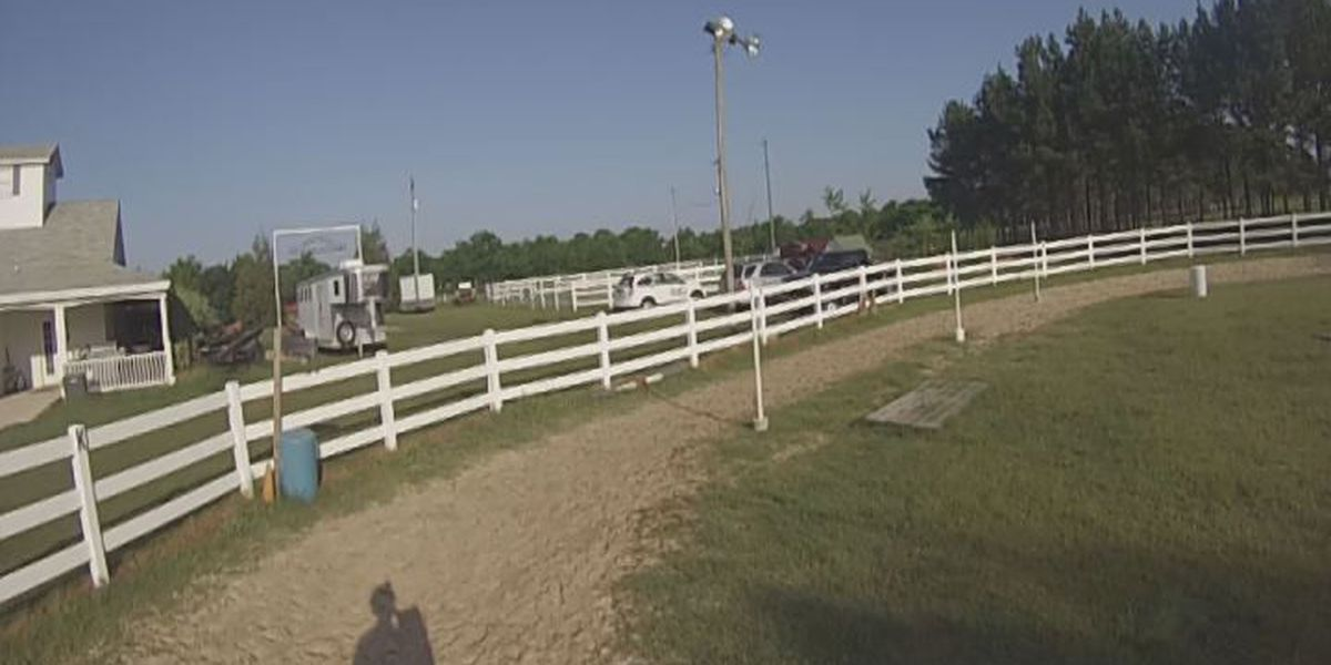 New horse riding program helps military members