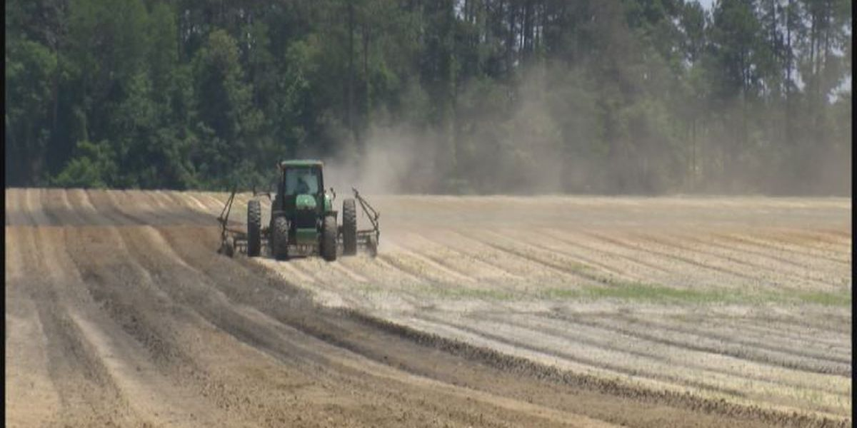 Peanut farmers excited to get in the field