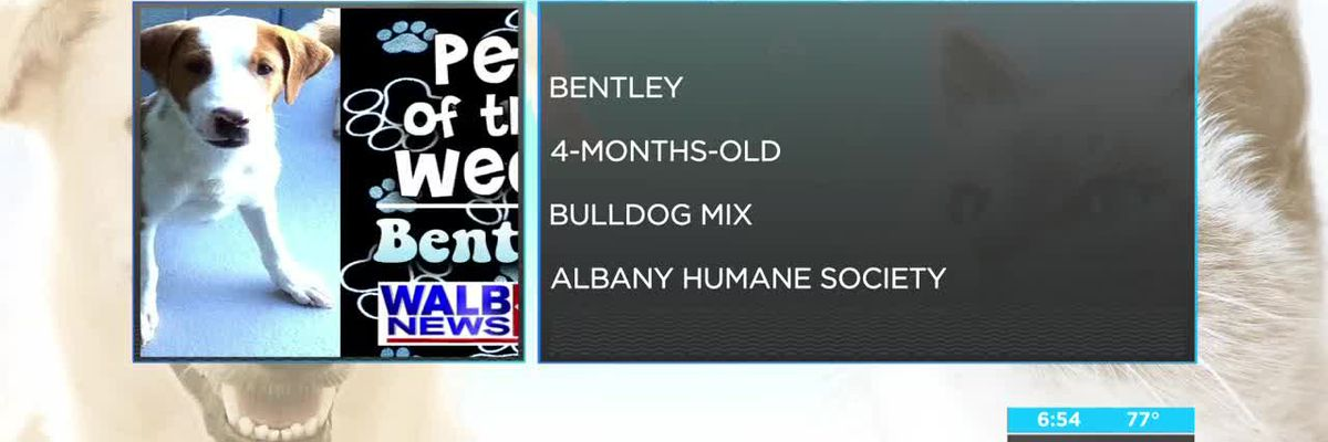 Sept. 10-14 Pet of the Week