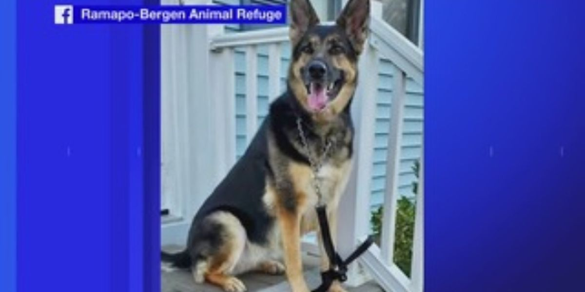 Rescue dog helps save owner's life during stroke
