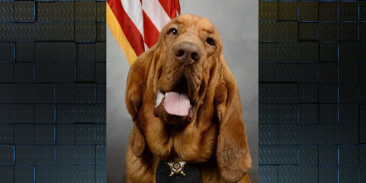 Meet Roscoe: A Crisp Co. K9 with a scent for success