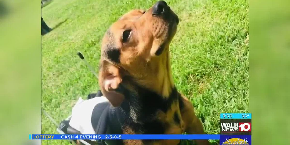 'Put him out of his misery': Dog left paralyzed by pellet gun gets second 'Chance' at life, 'furever