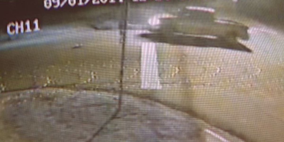 Video shows Albany drive-by shooting