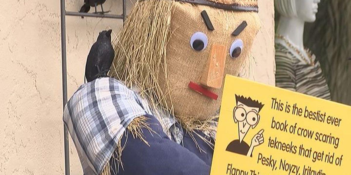 Sylvester use scarecrows to kick off