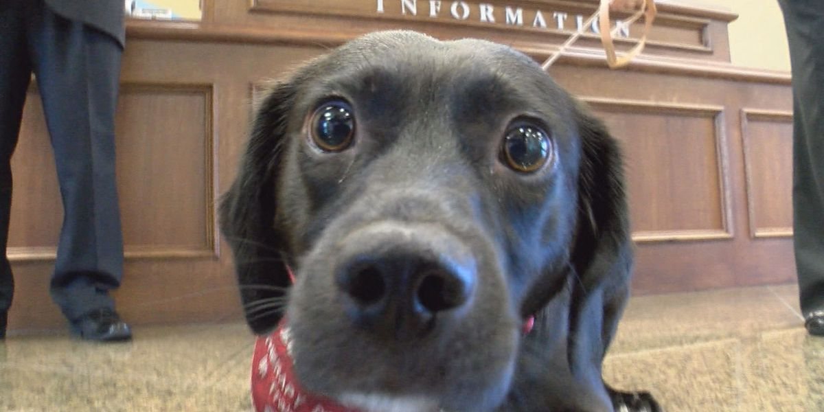 Precious pup is newest victims advocate in Lowndes