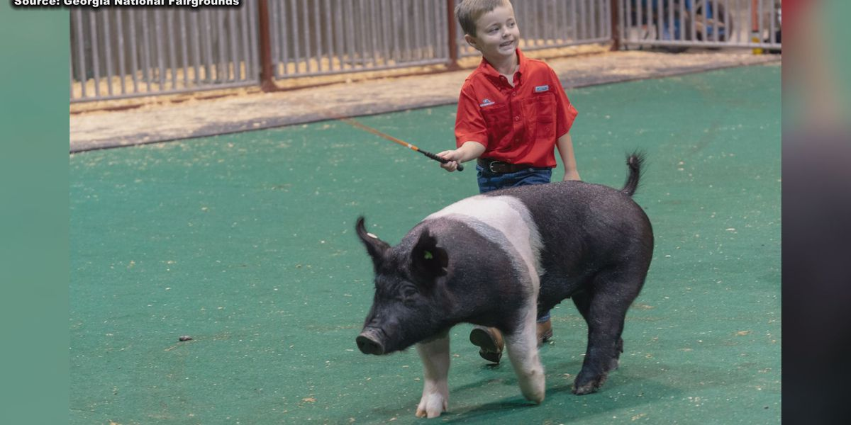 First-ever junior swine show to be held at Georgia National Fair