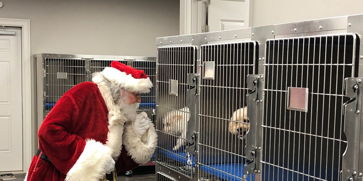 Philema Animal Shelter host open house with Santa