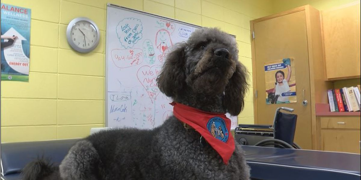 Therapy dog enrolls in South GA school district