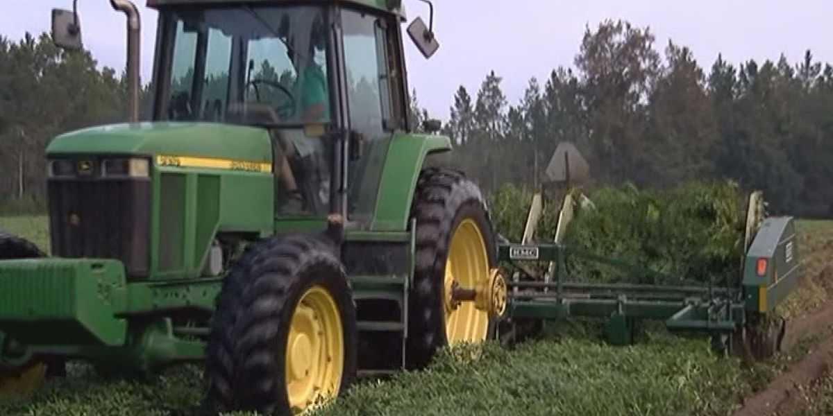 Foundation's lawsuit claims USDA discriminates against black farmers