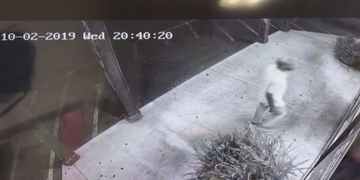 Reward out for man who stole ox tails from Albany store